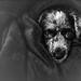 Bundled in a blanket by FotoGrazio