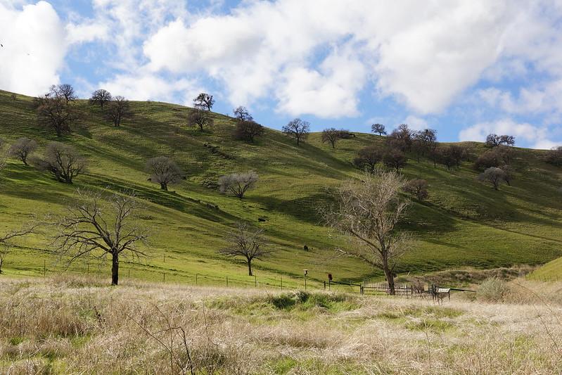 2017-01-05 Contra Loma Regional Park (#3)