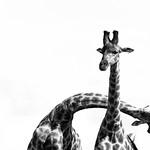 Your Best Shot 2016 - Wildlife