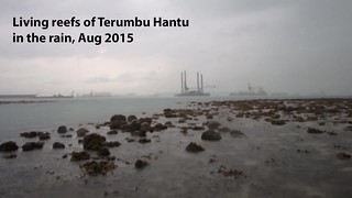 Living reefs of Terumbu Hantu
