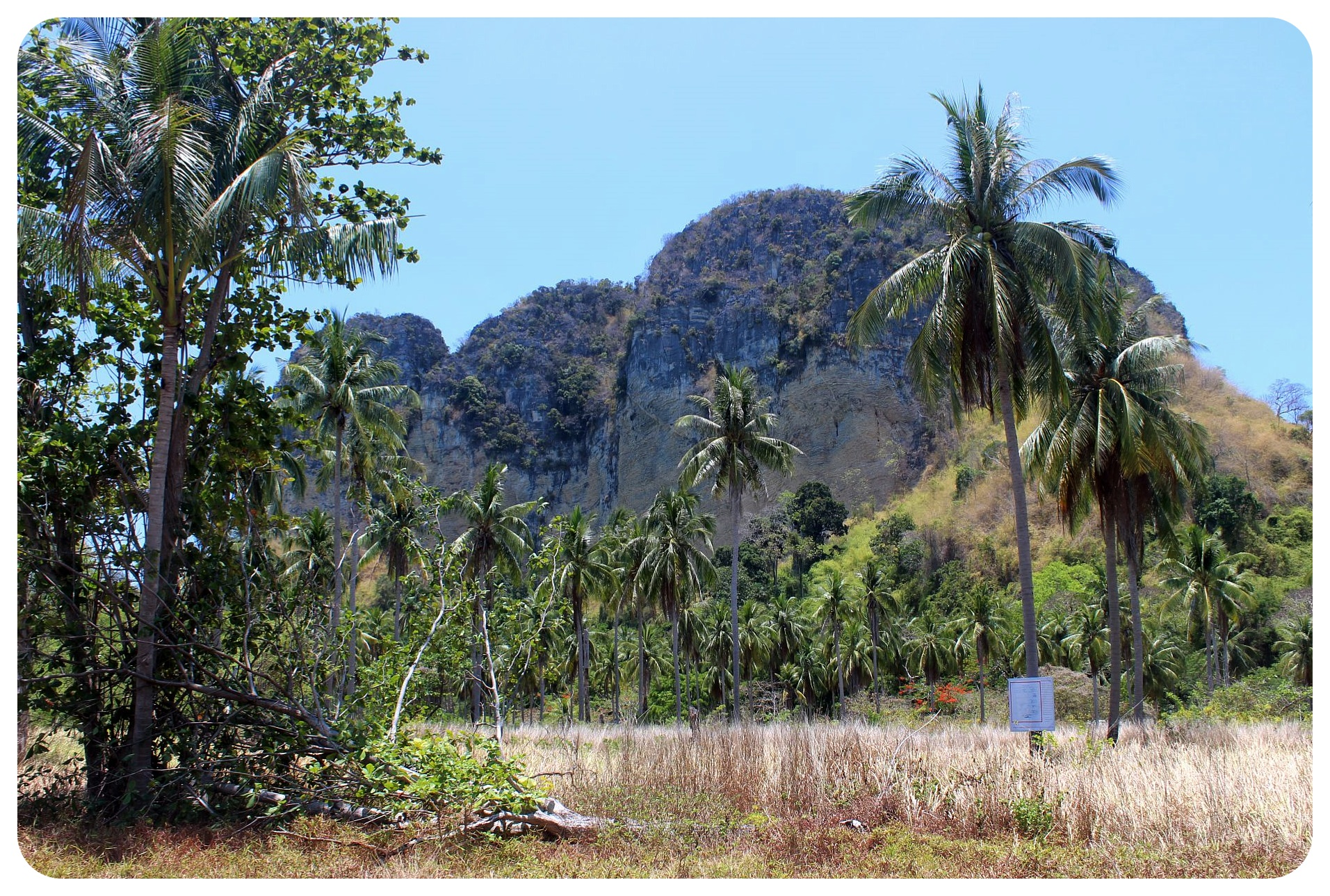 koh poda palm trees