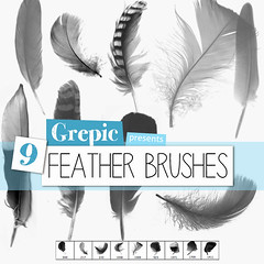 Photoshop brush: Feather Photoshop Brushes