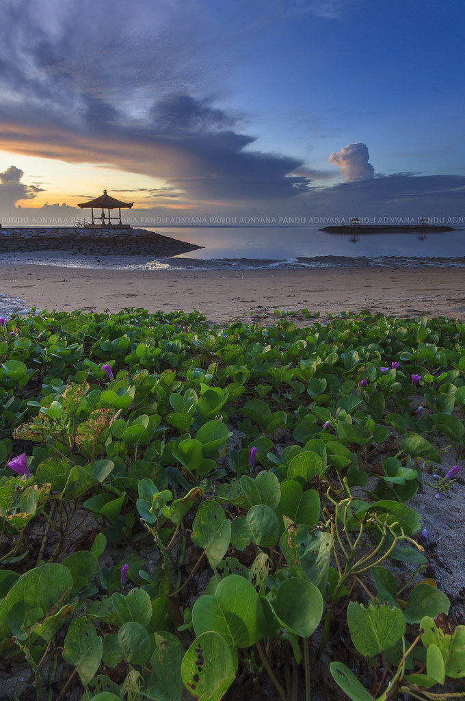 Image Result For Travel Tour Bali