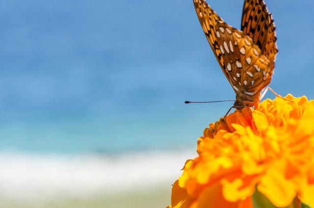 Brand!n - Butterfly Beach Bum