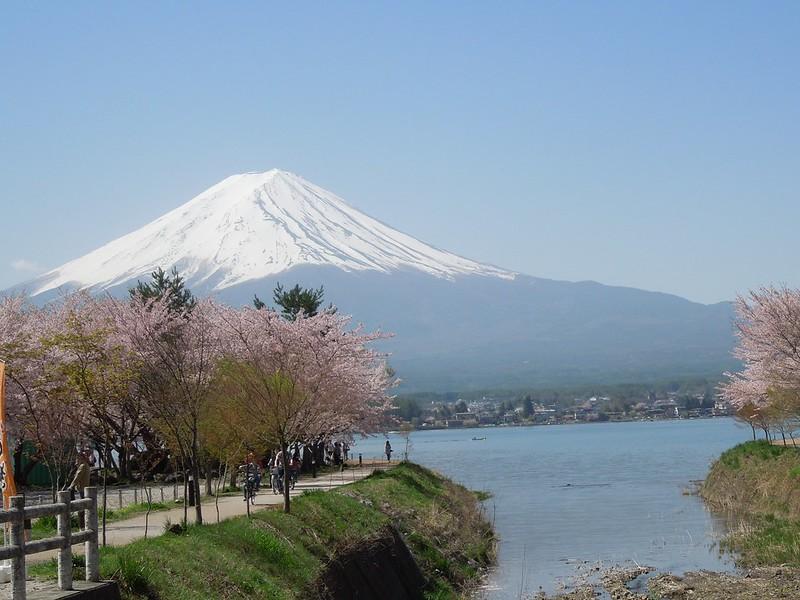 河口湖 富士山と桜 Lake Kawaguchiko – Mt. Fuji and cherry blossoms-0005