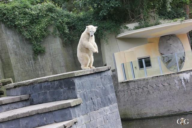 Zoo Rostock 19.09.2015117