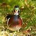 Reifel Bird Sanctuary,near Vancouver,29Sep16.5 by Pervez 183A.