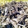 Viejas viñas