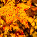 Golden Yellow by Back Road Photography (Kevin W. Jerrell)