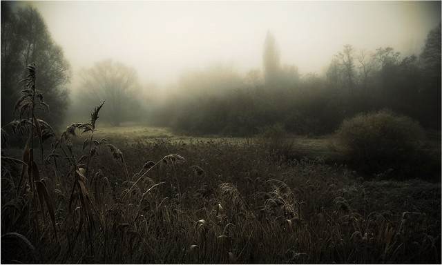 Follow me in a foggy morning