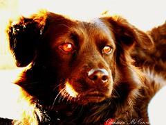 Heroic animals beasts dog...
