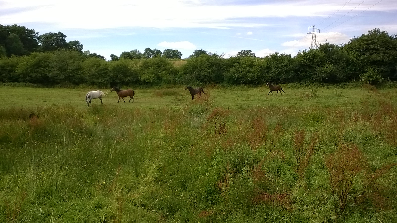 Horses near Giffords Wood West Sussex