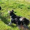 Come on!!! Throw it!!! #happydog