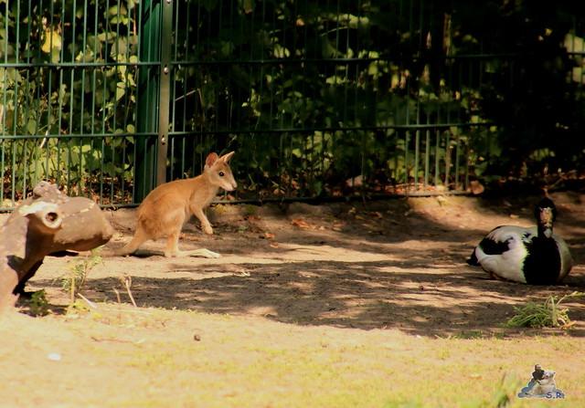 Tierpark Berlin 16.08.2015  0153