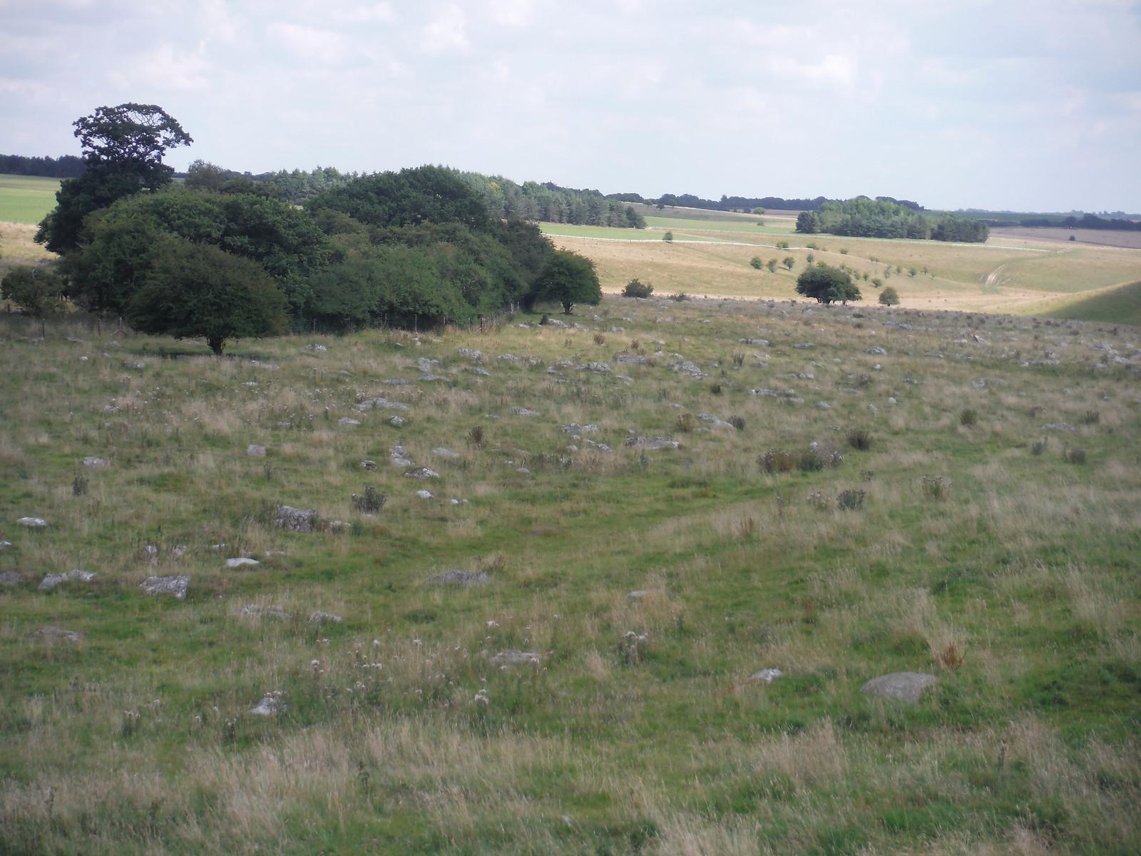 Fyfield Down Sarsen Stone Field SWC Walk 255 Pewsey or Marlborough Circular via Avebury