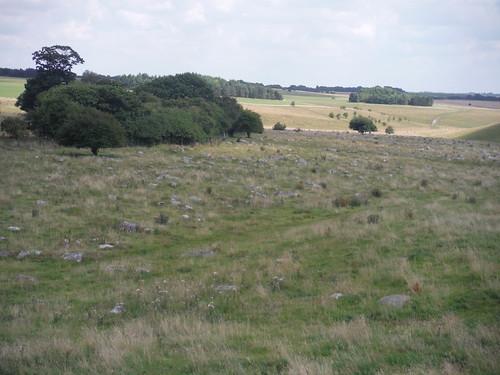Fyfield Down Sarsen Stone Field