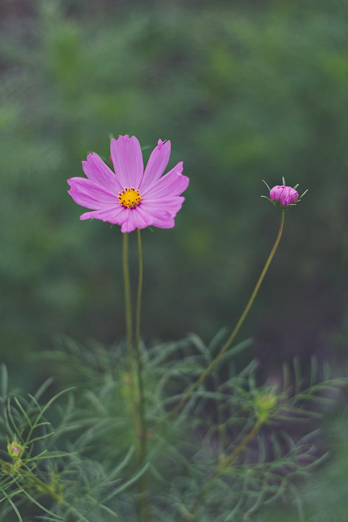 Hama-rikyu-Gardens-8