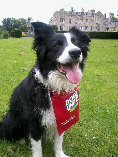 Dogs Unite Match a Mile for Barney