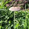 Little Mushroom by _jons_