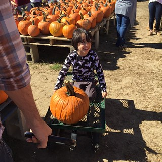 Pumpkin Patch!