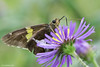 Butterfly 2015-9