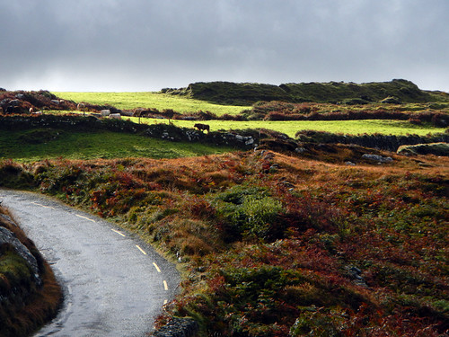 A narrow road curves around farmland in the Beara Peninsula drive