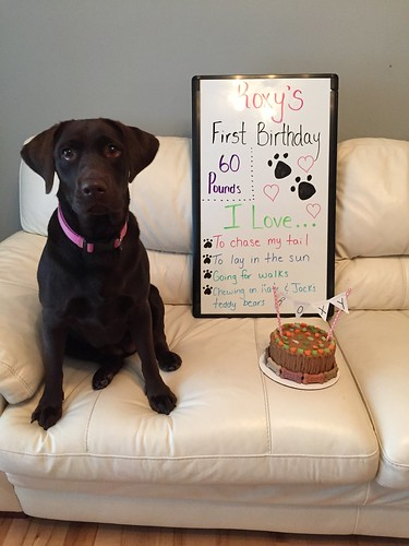 Roxy turns 1