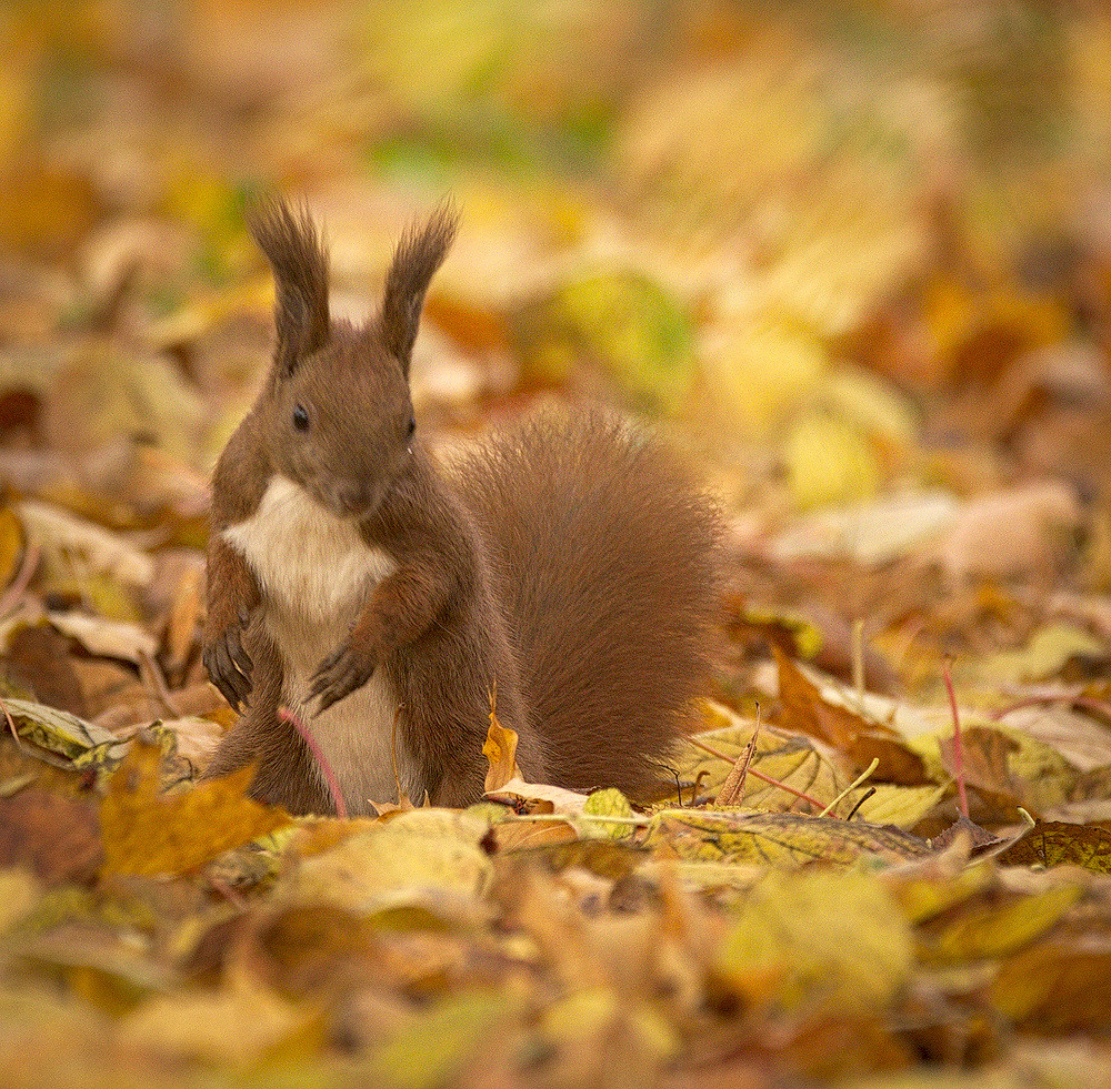 Searching in leaves