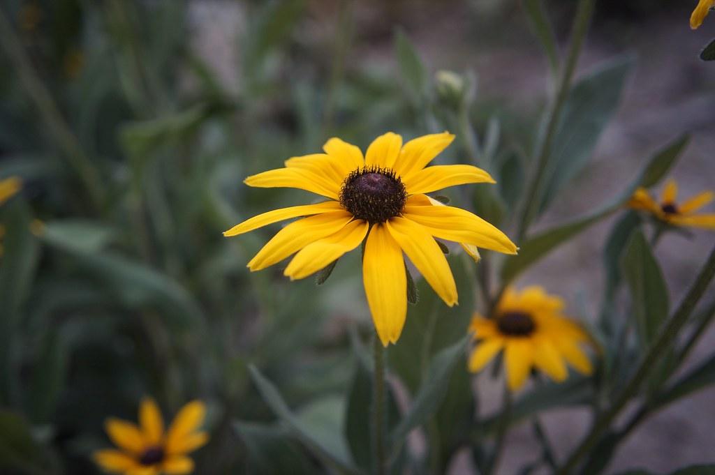 Flowers of summer