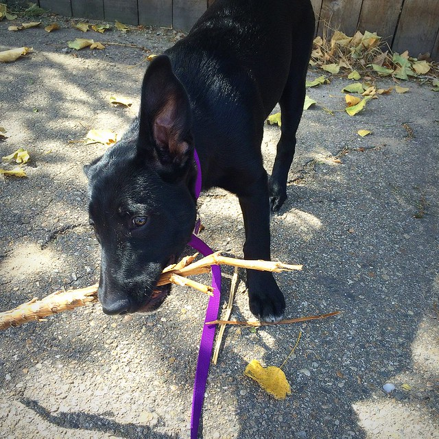 Lucy finds a stick