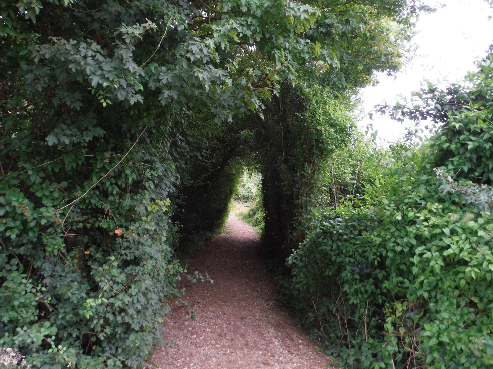 Covey's Lane SWC Walk 164 Roydon to Sawbridgeworth via Henry Moore Foundation