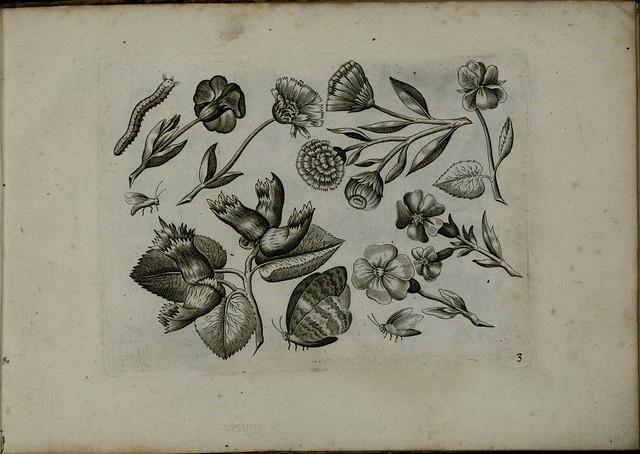 Viridarium Novum b