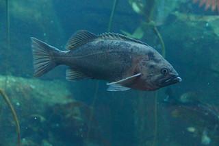 415 Aquarium Sea Life Center