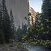 dogwood day_SMB6765 by steve bond Photog