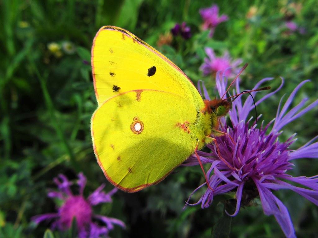 Butterfly 716