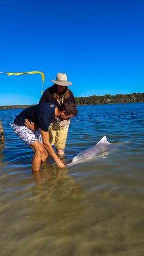 Stephans Delphinfütterung in Tin Can Bay