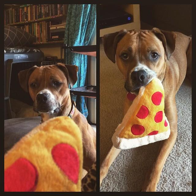 Pizza Stuffy #dogs #boxerdog #stuffies #🍕