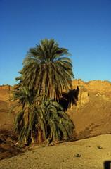 Ägypten 1999 (534) Tempel von Dendera