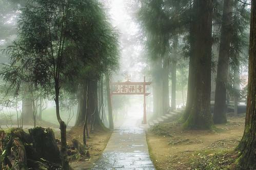 alishantownship taiwanprovince taiwan tw forest trees green fog