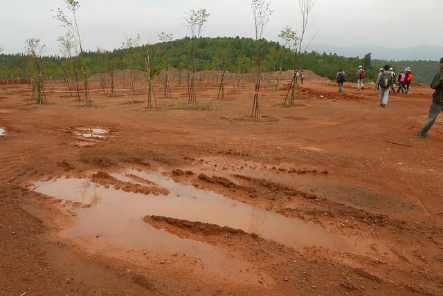 補償林,即工程單位另行規劃的植被區。攝影:晁瑞光。