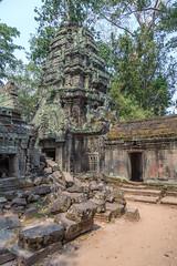 Cambodia - Siem Reap - Ta Phrom - 21 03 2014