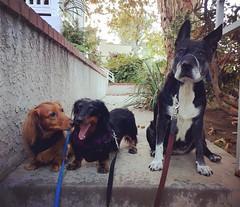 Max, Lucy & Sasha