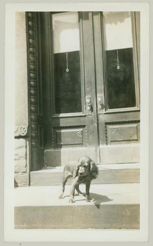 Dog on the steps