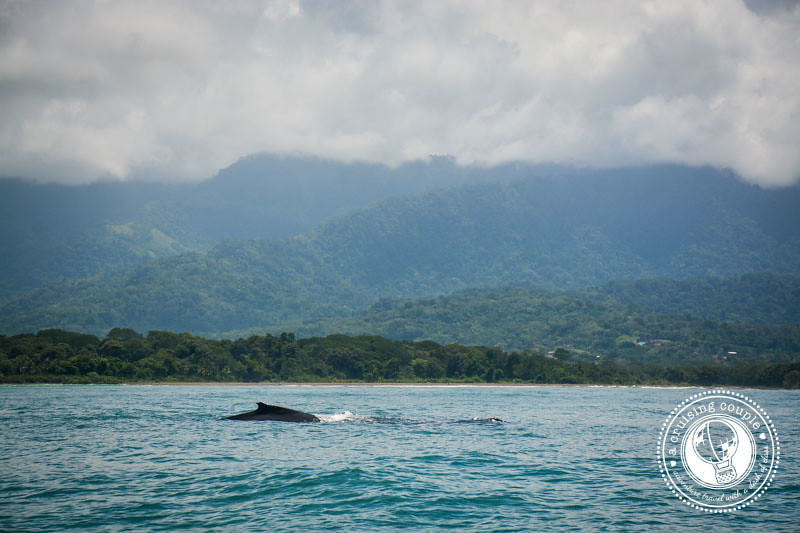 Humpback Whale Watching Costa Rica
