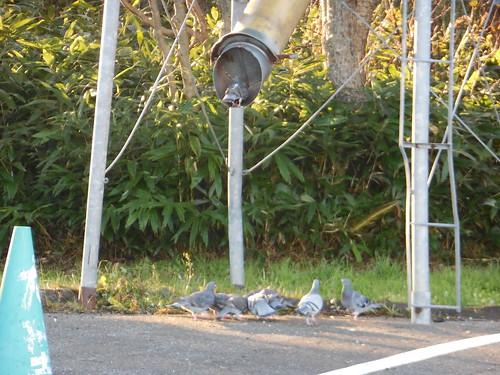 hokkaido-kuccharo-lake-dove