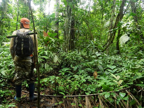 Hike through Madidi National Park - Amazon forest - Bolivia
