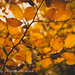 Autumn Leaves by Gale's Photographs