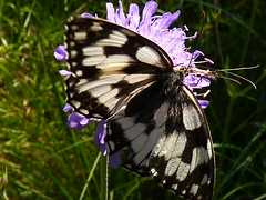 Papillon - Photo of Jours-en-Vaux