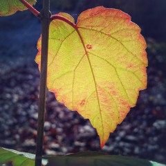Autumn sunshine in the park  Blackberry PRIV