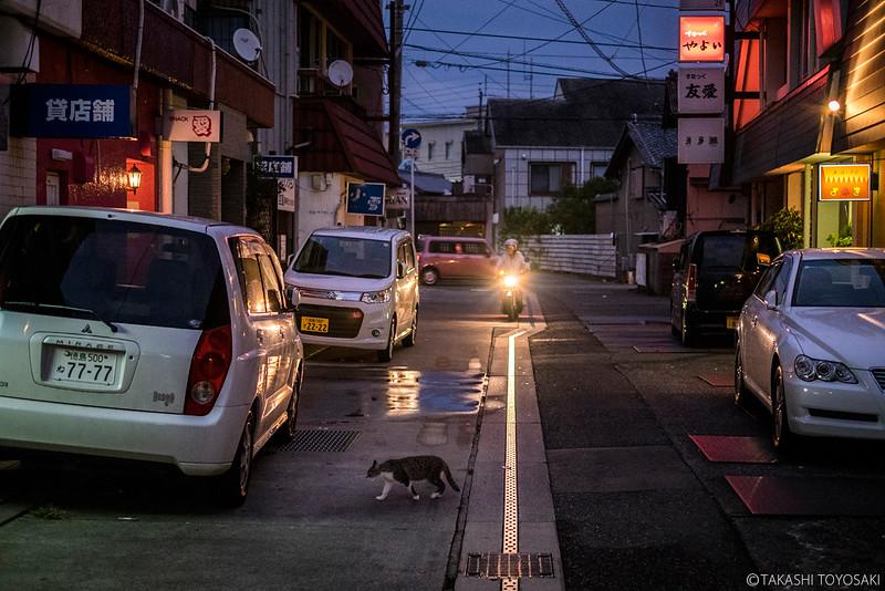 Tokushima Cat Color #236